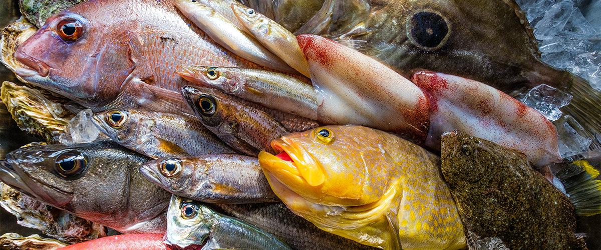 新鮮な玄界灘鮮魚